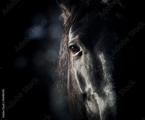 Staande foto Paarden horse eye in dark