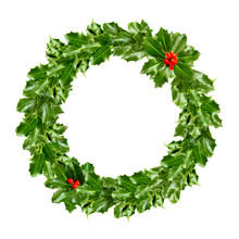 Christmas Wreath Of Holly - Green Leaf Isolated