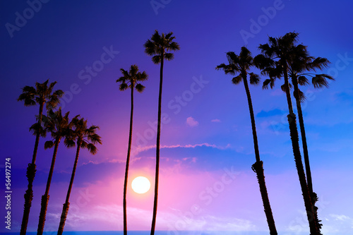 Staande foto Los Angeles California high palm trees sunset sky silohuette background USA