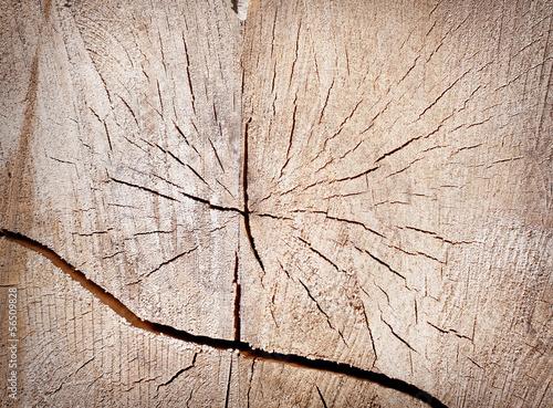 Fototapeta premium brązowe tło pęknięty pniu drzewa