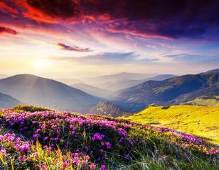 Obraz na Szkle Krajobraz nature