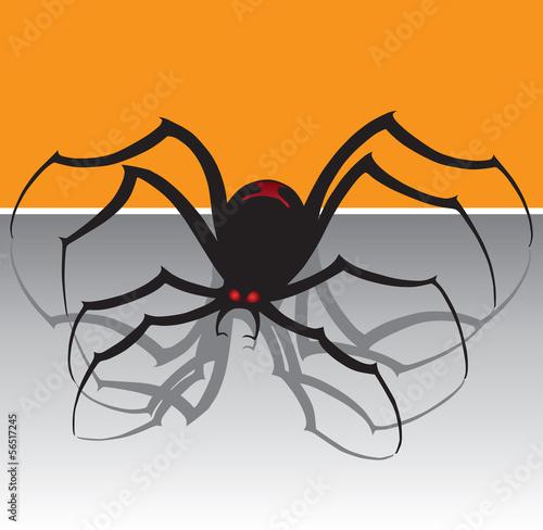 Photo  Black Widow Spider