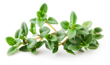 Thyme Isolated On White Backgr...