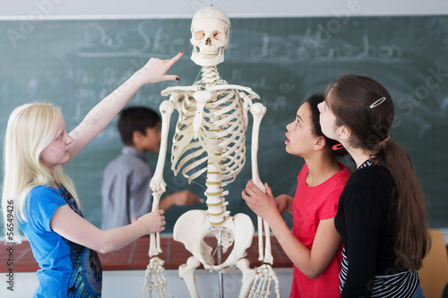 Fotografía  Schüler untersuchen Skelett