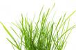 canvas print picture - Grasbüschel auf weißem Hintergrund
