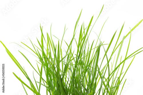 Grasbüschel auf weißem Hintergrund Fototapet