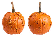 Two Views Of A Warty Pumpkin I...