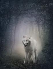 Fototapeta White wolf