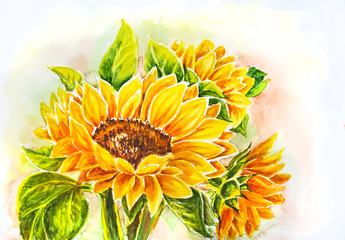 FototapetaSunflowers. Watercolor painting.