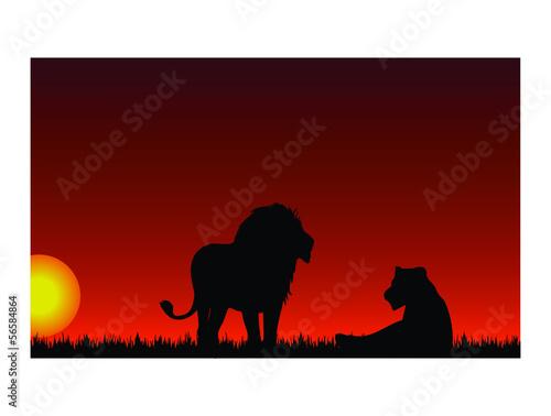 Foto auf AluDibond Ziehen Sunset with lion and lioness