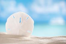Sand Dollar Shell On Sea And B...