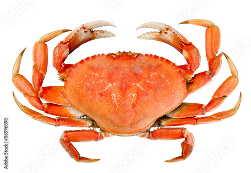 Photo  Isolated Whole Dungeness Crab