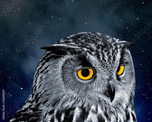 Fototapeta Eagle Owl, Bubo bubo obraz na płótnie