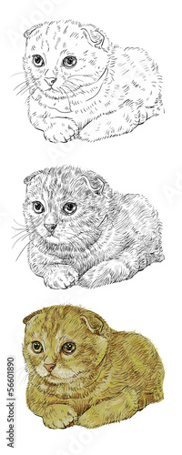 Photo sur Toile Croquis dessinés à la main des animaux Scottish Fold cat