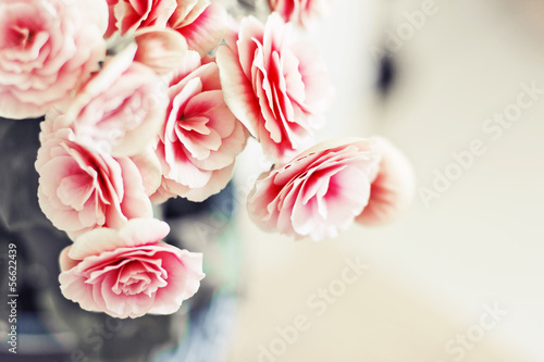 Foto-Plissee - Roses in vintage style (von iravgustin)