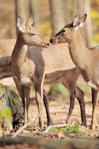 Deurstickers Hert Deer in autumn forest