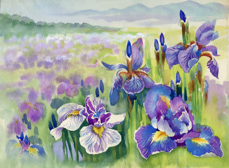 Plakat Beautiful iris meadow in watercolor