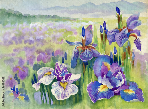 Foto op Plexiglas Iris Beautiful iris meadow in watercolor