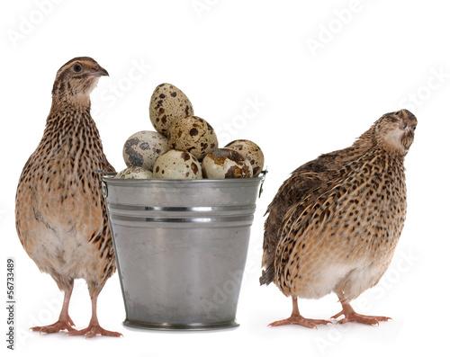 Foto Quail eggs