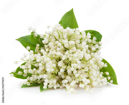 Wall Murals Lily of the valley isolated on white background