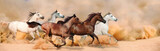 Fototapeta Horses - Herd gallops in the sand storm