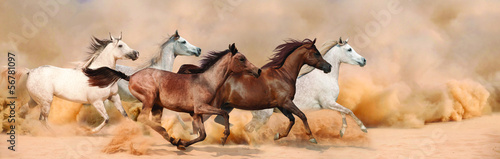 Poster Paarden Herd gallops in the sand storm