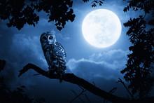 Owl Illuminated By Full Moon On Halloween Night