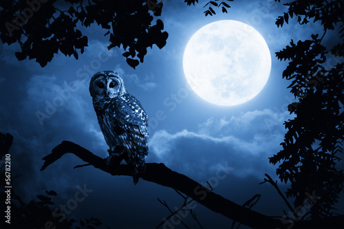 Staande foto Uil Owl Illuminated By Full Moon On Halloween Night