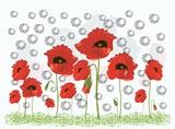 Fototapeta Kwiaty - czerwone maki