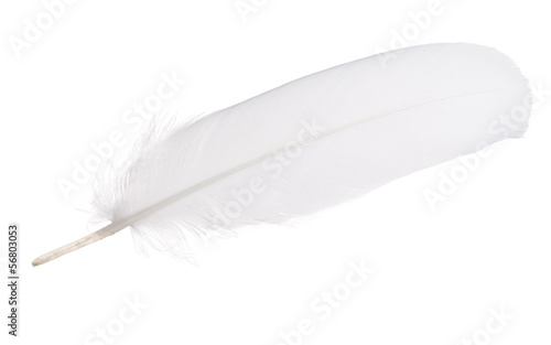 white isolated straight feather