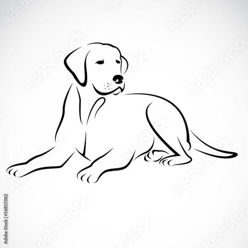 Photo  Vector image of an dog labrador