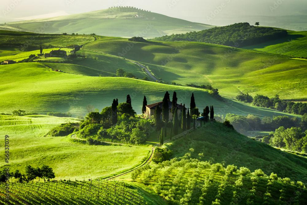 Fototapety, obrazy: Gospodarstwo gajów oliwnych i winnic