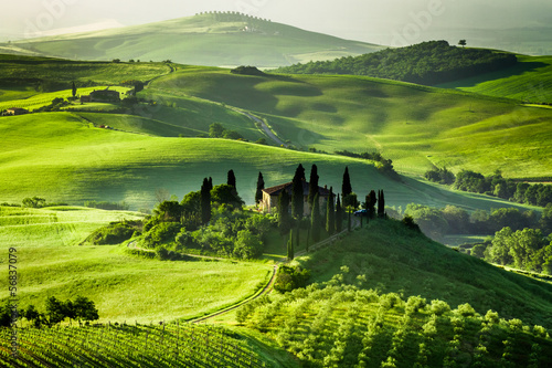 Foto auf AluDibond Weinberg Farm of olive groves and vineyards