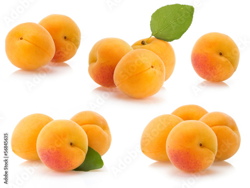 apricot on white background Canvas Print