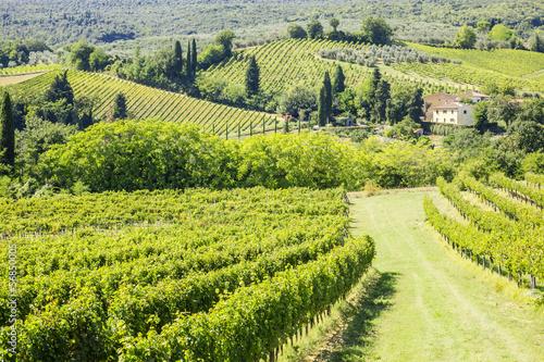Papiers peints Vignoble Wine Hill Italy