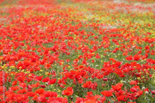 Staande foto Rood paesaggio toscano