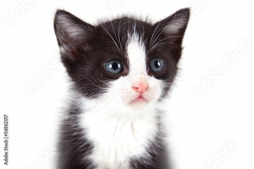 szczeniak-kot-na-bialym-tle