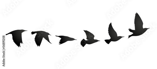 Obraz Vogelzug Vektor Silhouette - fototapety do salonu