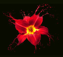 Red Flower Splashes