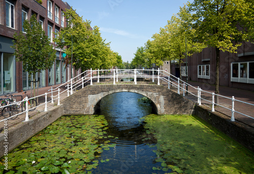 Foto  Lotus Covered Canal in the Netherlands with Pedestrian Bridge