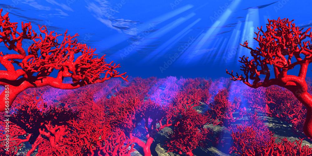 Fototapeta rote Korallen unter Wasser