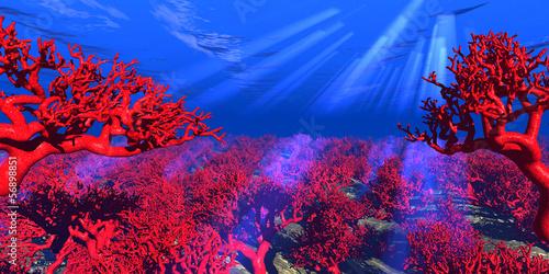 rote Korallen unter Wasser