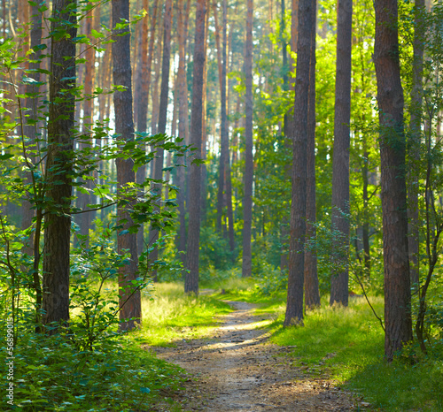 Tuinposter Weg in bos Forest sunrise