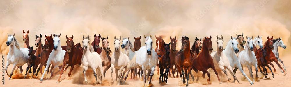 Obraz Horses herd running in the sand storm fototapeta, plakat