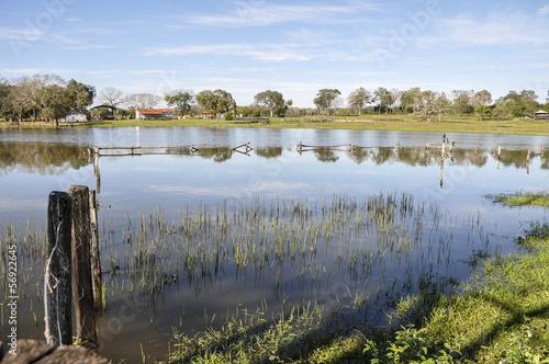 Brazil, Pantanal, flooded farm Fototapet