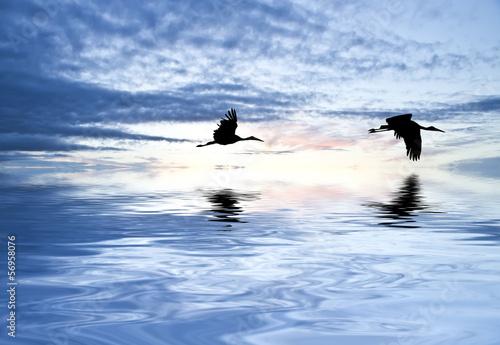 cruzando el ancho mar