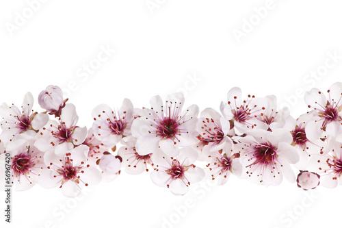 Foto op Aluminium Kersenbloesem Cherry blossoms border