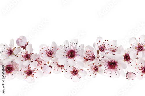 Ingelijste posters Kersenbloesem Cherry blossoms border