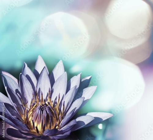 Fototapety, obrazy: Lotus