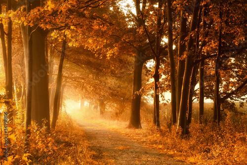 Foto op Canvas Weg in bos Wanderweg in goldener Herbstsonne und Nebel